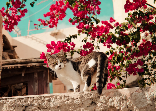 street kitty | by ☼Ourania2005