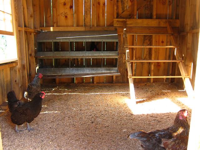 Inside the chicken coop flickr photo sharing for Chicken coop interior designs