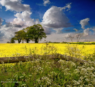 A bright day (in the UK) | by PhotoArt Images (mostly off)