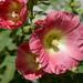 Flower 57170
