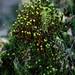 coniferous growing on moss