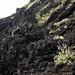 Lava, Hachijo-jima / 八丈島・溶岩