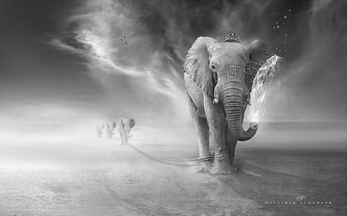 Elephants trip | by suliman almawash