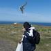 Bird attacking Mr Bear