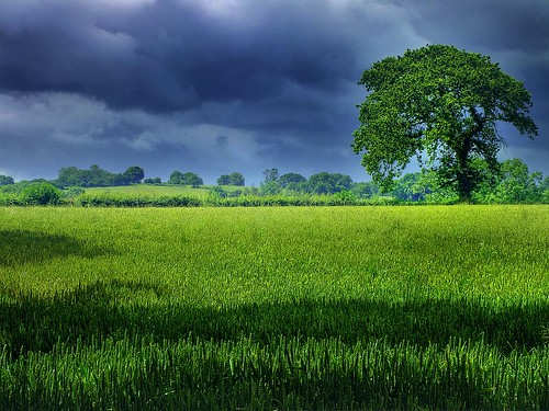 Simply green | by Adelino Goncalves