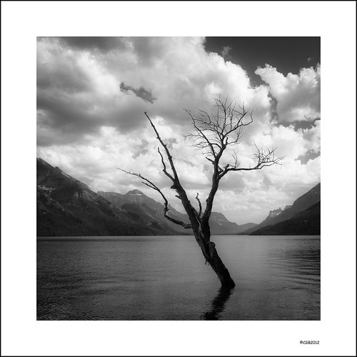 Lone Tree on Waterton Lake. | by local37