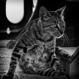 Cat, i'm a kitty kat... | by PeterChinnock