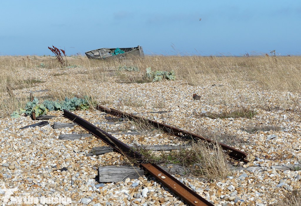 P1040684 - Dungeness