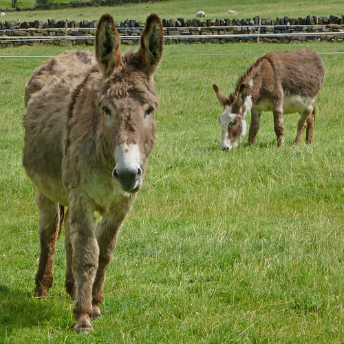 Donkeys | by Tim Green aka atoach