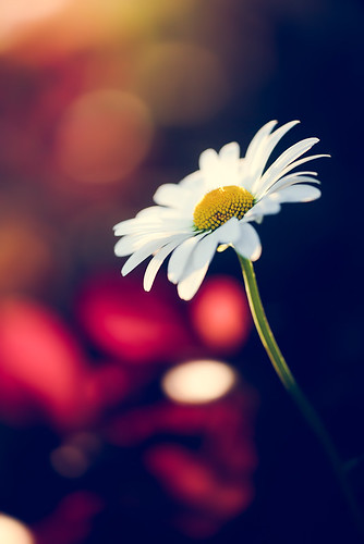 Daisy, Daisy how does your garden grow? | by Matthew Dartford