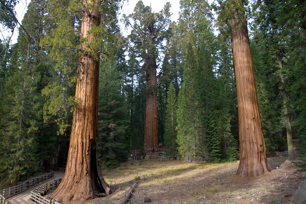 sequoia national park online dating 'president' is the name given to a giant sequoia located in the sequoia national park, usa so what makes this giant sequoia the 'president' [online.
