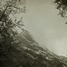 ºº Wald WindoW ºº