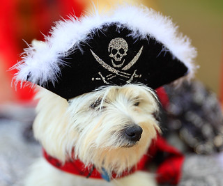 Arrrggggg Matey thea ship be goin to the dogs! 2012 Scarborough Renaissance Festival (SRF) | by gbrummett