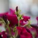 Flower (test)