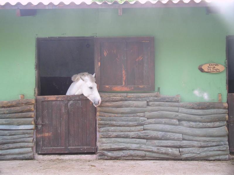 Everest Horse Club