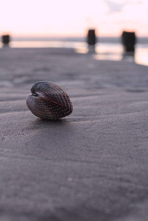 Shell Bokeh | by Aran Smithson