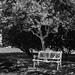 Day 163 of 366 - Shaded Bench