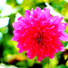 Flores del Valle II