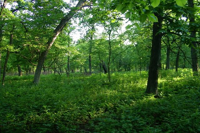 Danada Forest Preserve Wheaton Illinois Flickr