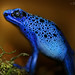 Bluetiful