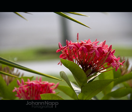 Red | by johannphoto