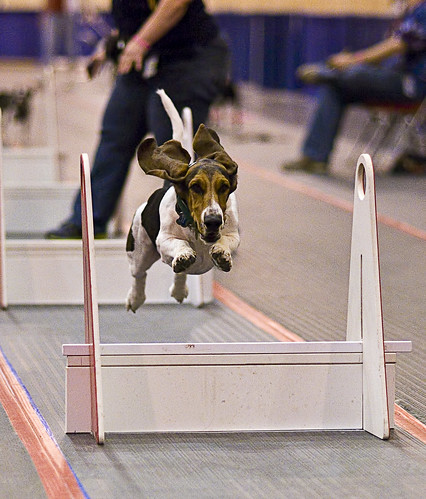 I am Flyball | by Mike Talplacido