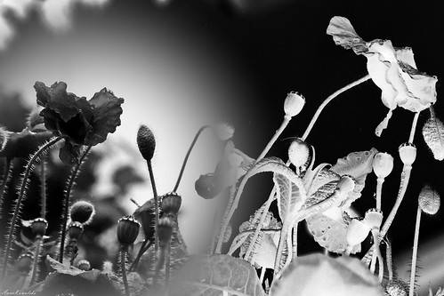 negative, black & white | by AnnaNat