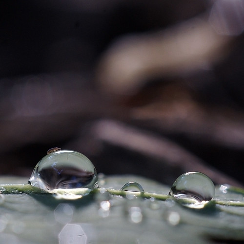 water drop macro (with a bug walking over it!) | by Bearseye