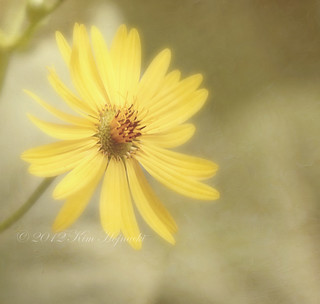 Sunny Side Up | by KimHojnackiPhotography