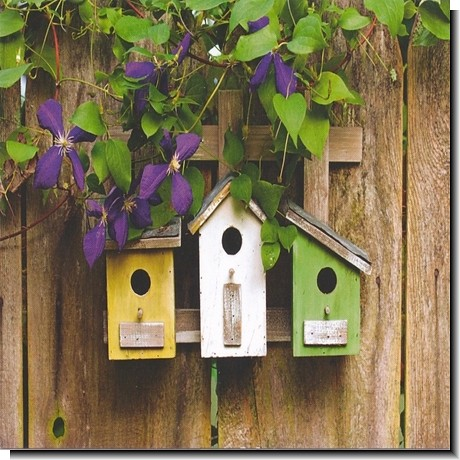 birdhouse plans for kids