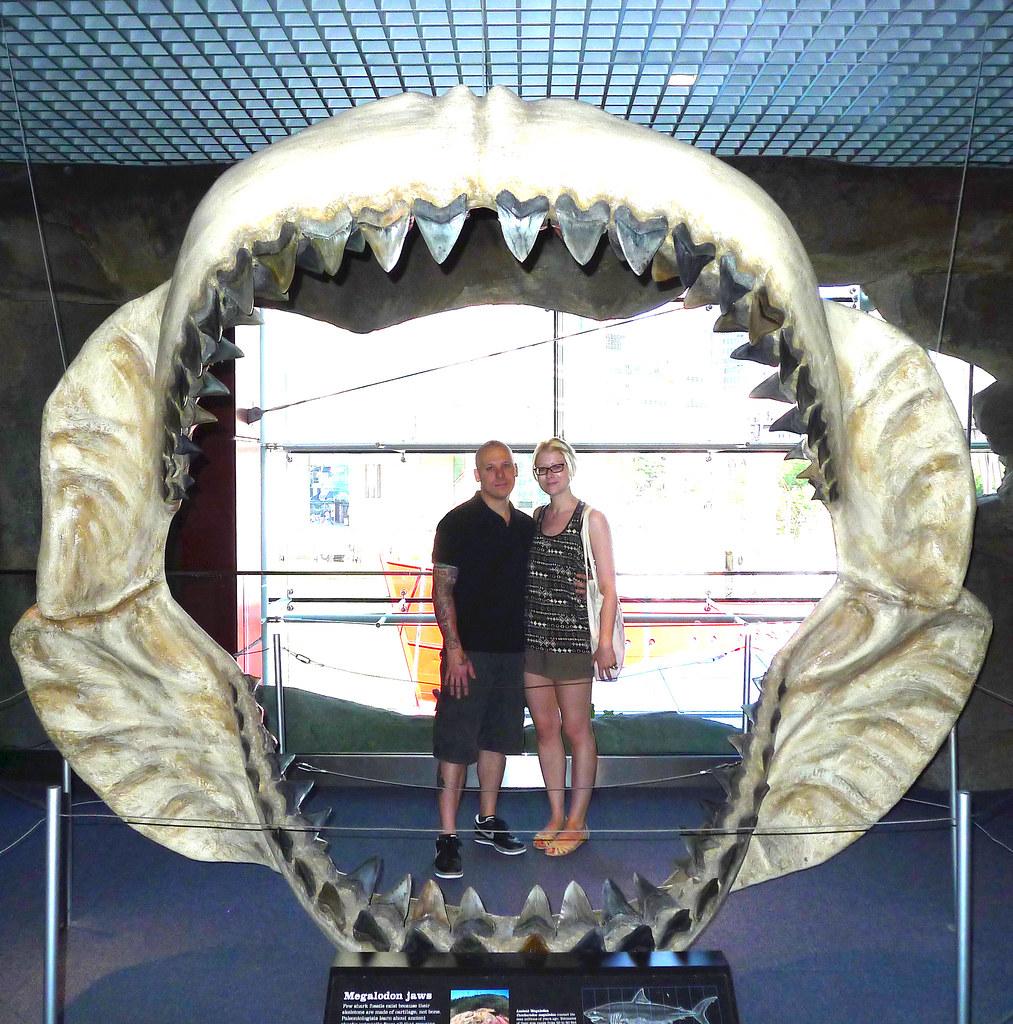 Megalodon Jaw   Baltimore Aquarium   Christina Storch   Flickr   1013 x 1024 jpeg 532kB