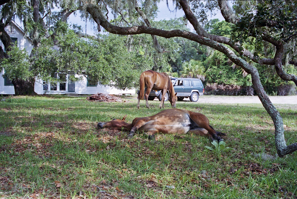 How To Get To Cumberland Island