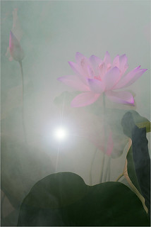 Lotus Flower Surreal Series: DD0A0765-s-1000 | by Bahman Farzad