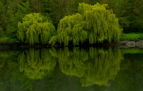 Green Reflection | by Danny Birrell