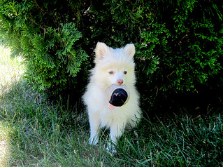 Sophie with Ball | by Melodybajema