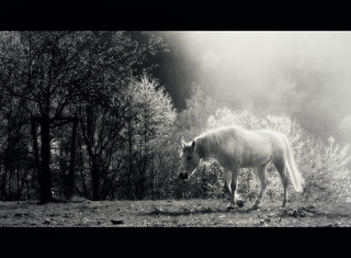Shadowfax | by BphotoR