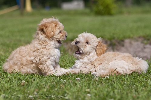You talk to much!! 2 puppies talking! | by Hans Surfer (where the action is)