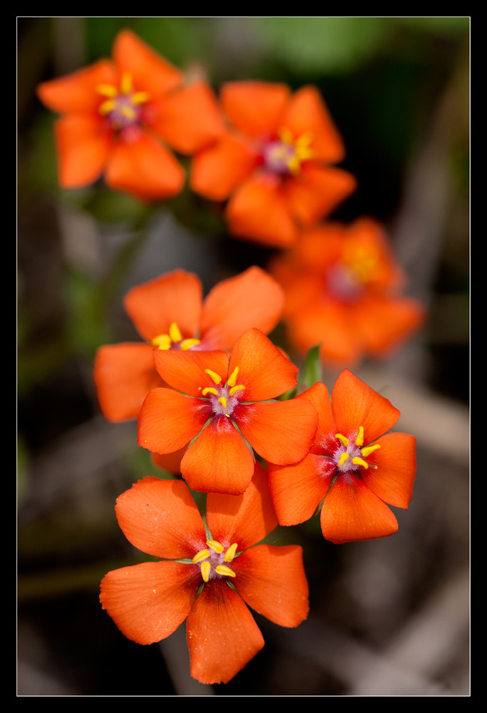 Very Pretty Orange Flowers Gian Luigi Fadda Flickr