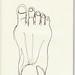 contour foot