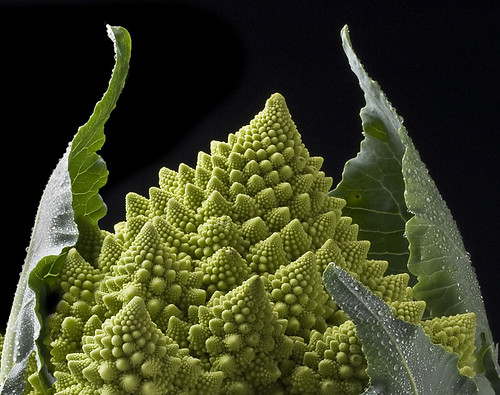 Romanescu Broccoli | by flickr_roo