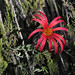 flower (3)
