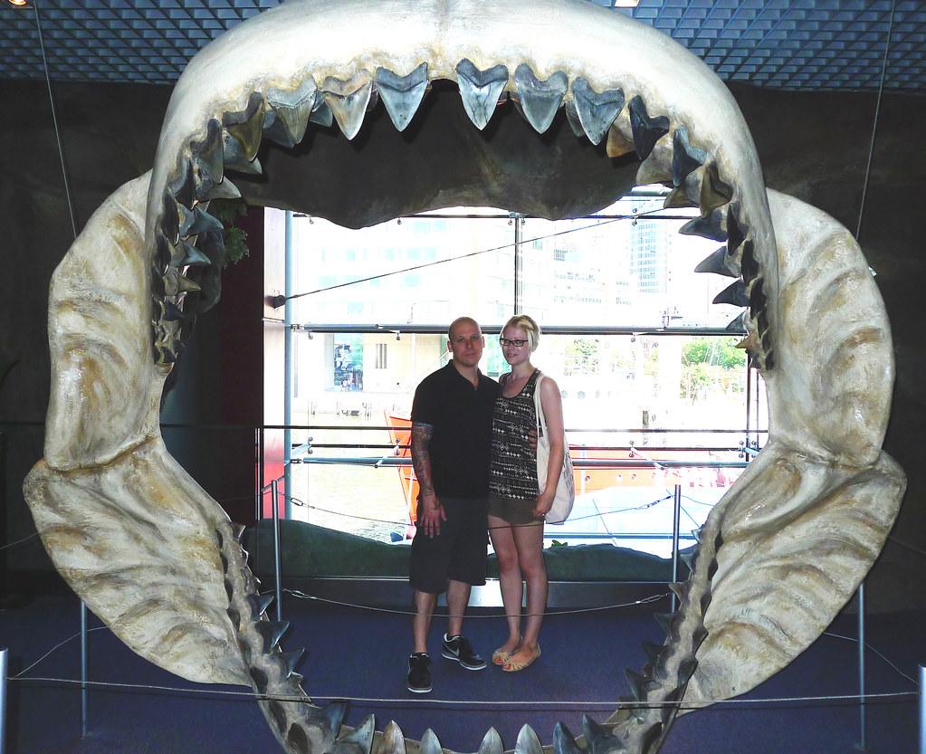 Megalodon Jaw | Baltimore Aquarium | Christina Storch | Flickr