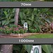 Nikon D800 Tests - D800 @ 1000mm: using Sigma 150-500mm w/ Tamron 2.0x Teleconverter.  (Example Comparisons)