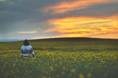 in fields of gold | by Tasha Maríe