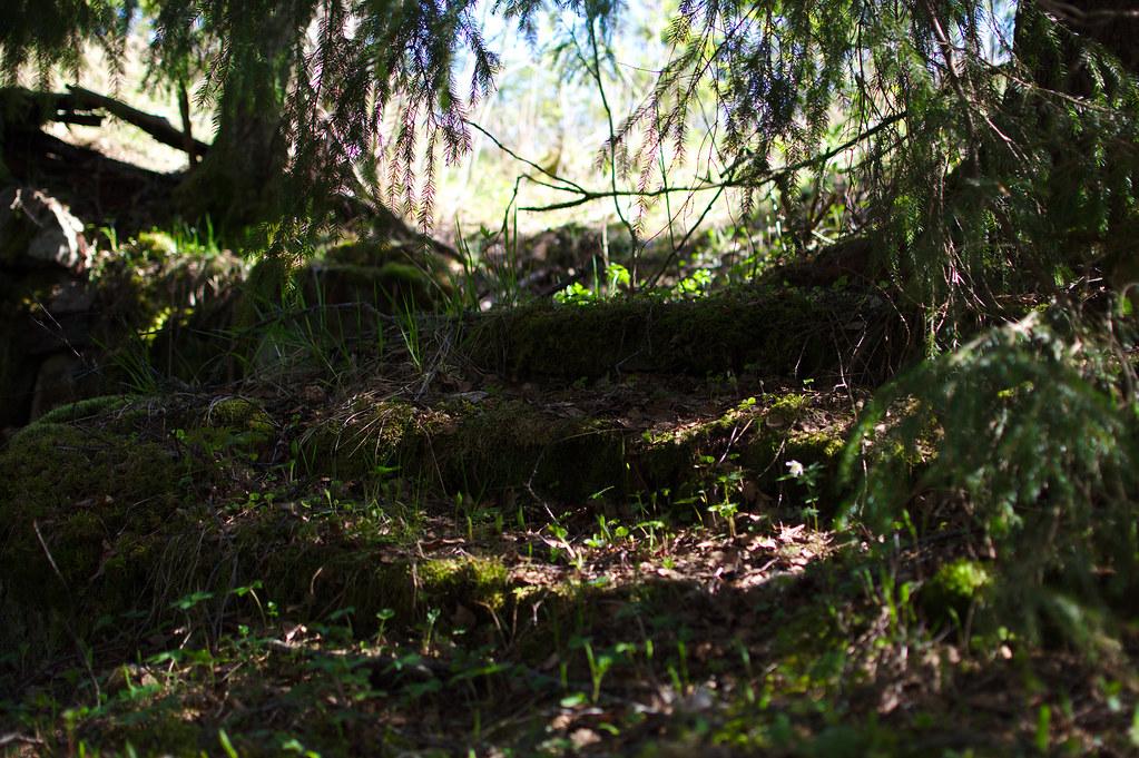 skogsbrynet