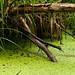 Marshlands 2