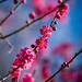 bye bye blossoms