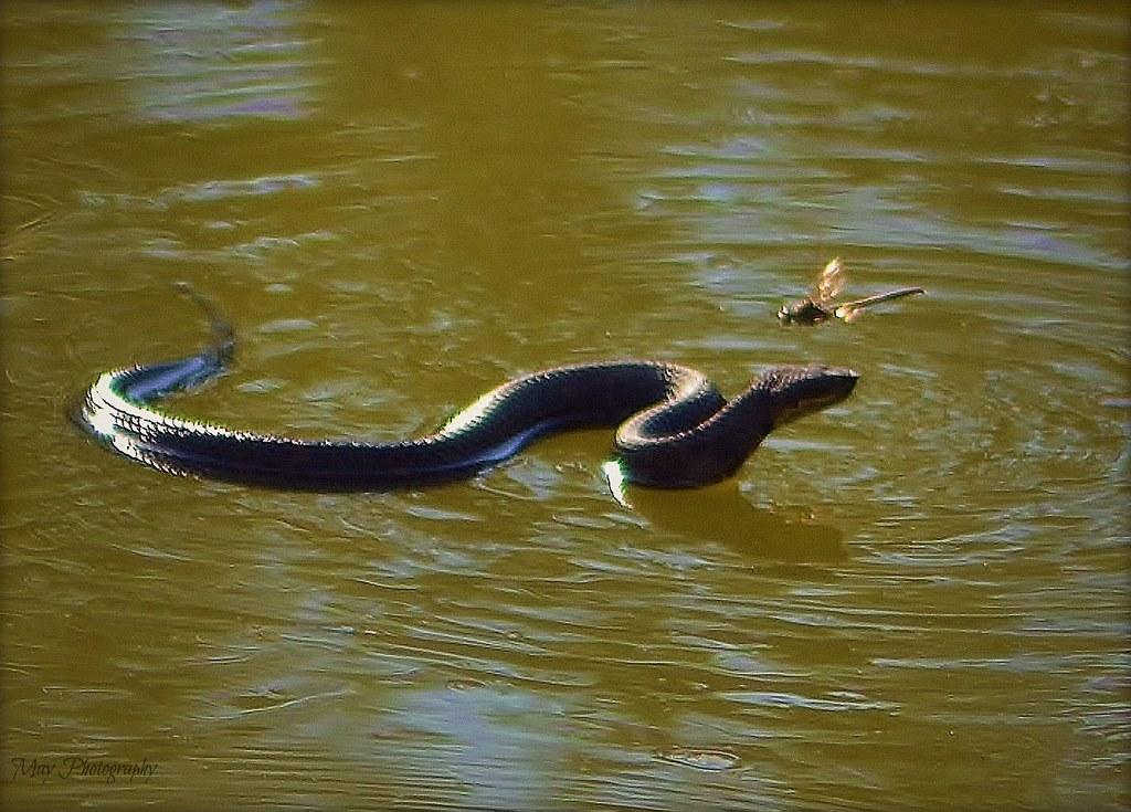 Убить змею во сне.к чему снится, что по зеленой траве к вам ползет плоская пятнистая змея, вы отскакиваете в сторону, змея проползает мимо, и вы забываете о ней, как вдруг змея вновь приближается к вам, увеличиваясь в размерах и, наконец, преображаясь в огромного змея, а вы ценой безумных усилий успешно избегаете его нападения и полностью избавляетесь от этого жуткого сны — все это значит, что в реальности вы скоро вообразите, будто вами пренебрегают и не уважают, а ваши дела идут все хуже и хуже.