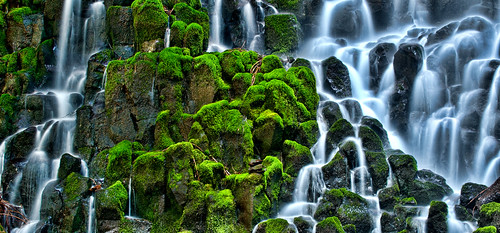 Mossy Goodness | by Bubba Trout