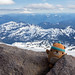 High altitude marmot